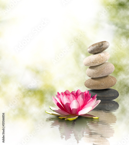 Image of stones and lotus flower on the water close-up