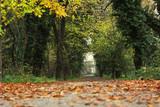 Fallen leaves on karditsa greece winter forest