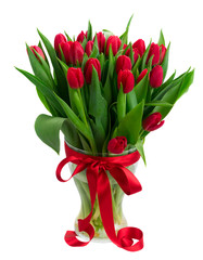 fresh red tulips with green leaves in vase isolated on white background