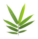bamboo leaves isolated on a white background