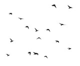 flock of pigeons on a white background - 131430225
