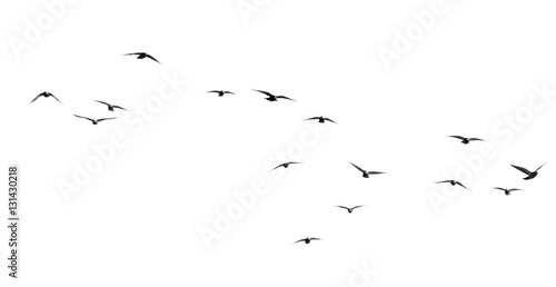 Foto Murales flock of pigeons on a white background
