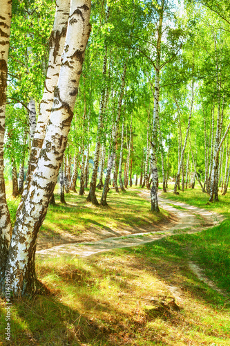In de dag Lime groen summer in sunny birch forest