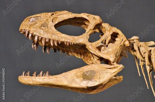 Poster 肉食恐竜の骨格