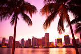 Miami Florida skyline and bay at sunset through two palm trees.  - Fine Art prints
