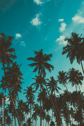 Aluminium Palm boom Palm trees on tropical beach, vintage toned and retro color stylized