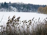 Toronto High Park view of winter pond 2016