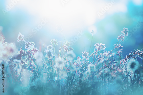 Autumn grass and wildflower background - 131558441