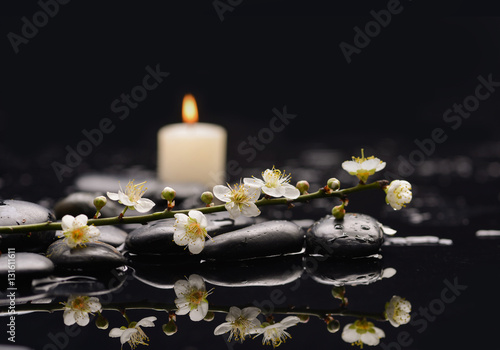 Poster Spa Still life with Spring blossom with white candle on black stones