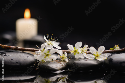 Poster Spa Spring blossom with white candle on black stones