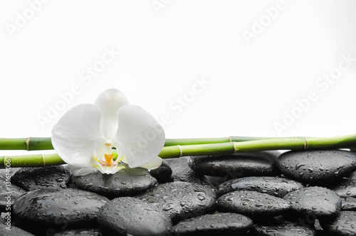 Poster Spa White orchid blossom with black stones ,grove on wet background