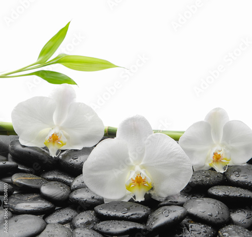 Poster Spa White orchid with black stones, bamboo on wet background