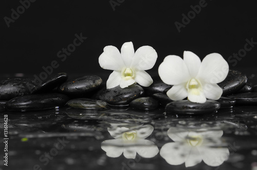 Poster Spa Two White orchid blossom with black on wet background