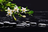 Still life with gardenia with therapy stones - 131615261