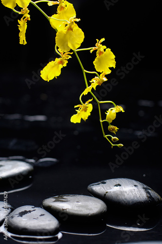 Poster Spa still life with yellow branch orchid and black stones