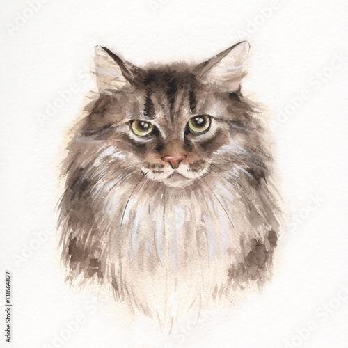 powazny-kot-ilustracja-akwarela-fluffy-kitty