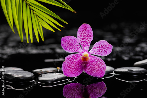 Poster Spa spa concept –pink orchid with stones and green plant