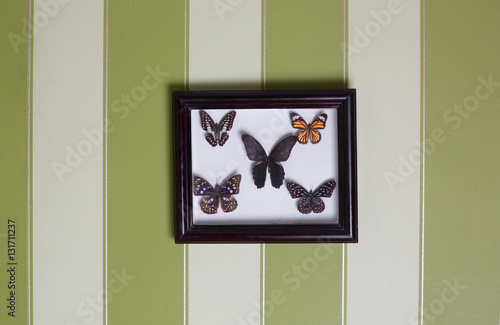Plagát, Obraz collection of butterflies in frame