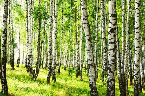 lato-w-slonecznym-brzozowym-lesie
