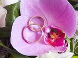Alianzas de boda sobre orquídea rosa