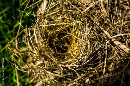 Poster Bird's nest