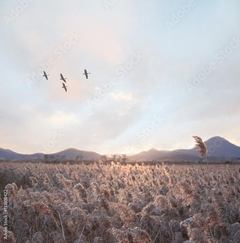 field landscape   - 131808422