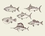 sea fish set. vector illustration