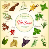 Herbs and hot spices vector poster - 131910203