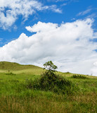 Beautiful landscape characteristic for the Gran Sabana - Venezuela, South America