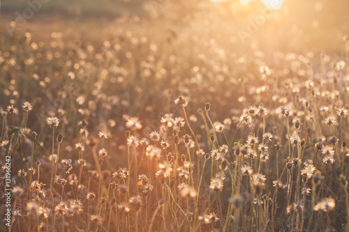 Poster Macro with extremely shallow DOF of Grass flower in pastel and Soft style in Fla