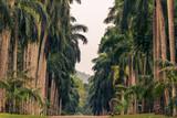 Sri Lanka: alley of palms in RoyalBotanicGardens, Peradeniya, Kandy  - 131979804