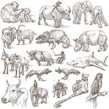 animals around the world - an hand drawn pack - 131985862