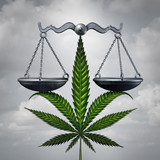 Marijuana Law Concept
