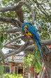 Parrot in the tree. Busch Gardens Tampa Bay. Florida.