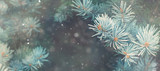 Fototapety Snow fall in winter forest. Christmas new year magic. Blue spruce fir tree branches detail. Banner image