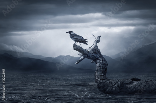 Poster Crow sitting on a branch