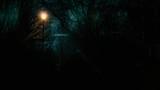 night time street light under a tree winter