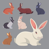 Fototapety vector illustration of cartoon rabbits different breeds. Fine bunnys for veterinary design