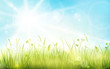 Green grass, blue sky, spring blurred bokeh background