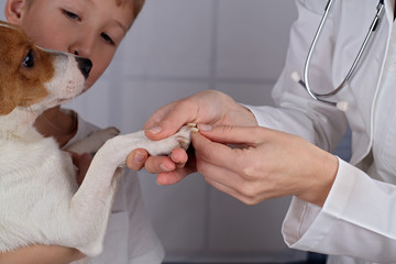 Young boy holding his dog during examination in veterinary clinic.The veterinarian checks nails to a dog
