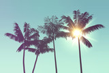 Tropical palm tree s...