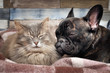 Cute cat and dog sleeping nearby. Affectionate, good relations of animals, love and friendship