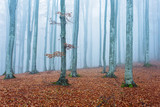 foggy forest in autumn to winter