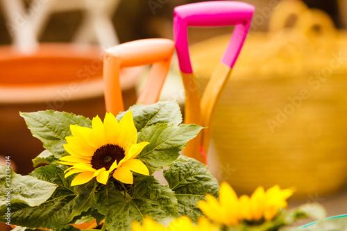Closeup of beautiful yellow flowers, sunflowers