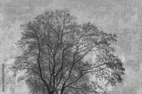 Tree silhouette on an abstract background. Art processing of photos, double exposure - 132141466