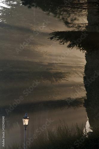 Poster Raggi di sole tra gli alberi
