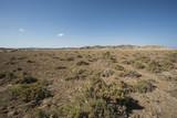 Bush vegetation on sand dune in desert
