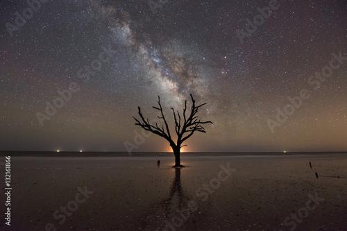 Dead Tree Under The Milky Way Galaxy