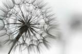 Pusteblume, Fortpflanzung, Visionen, Entfaltungsmöglichkeiten, Leichtigkeit, Verbreitung, Expansion