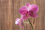 Romantic purple branch of orchid on the brown wooden background